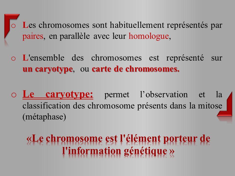 «Le chromosome est l élément porteur de l information génétique »