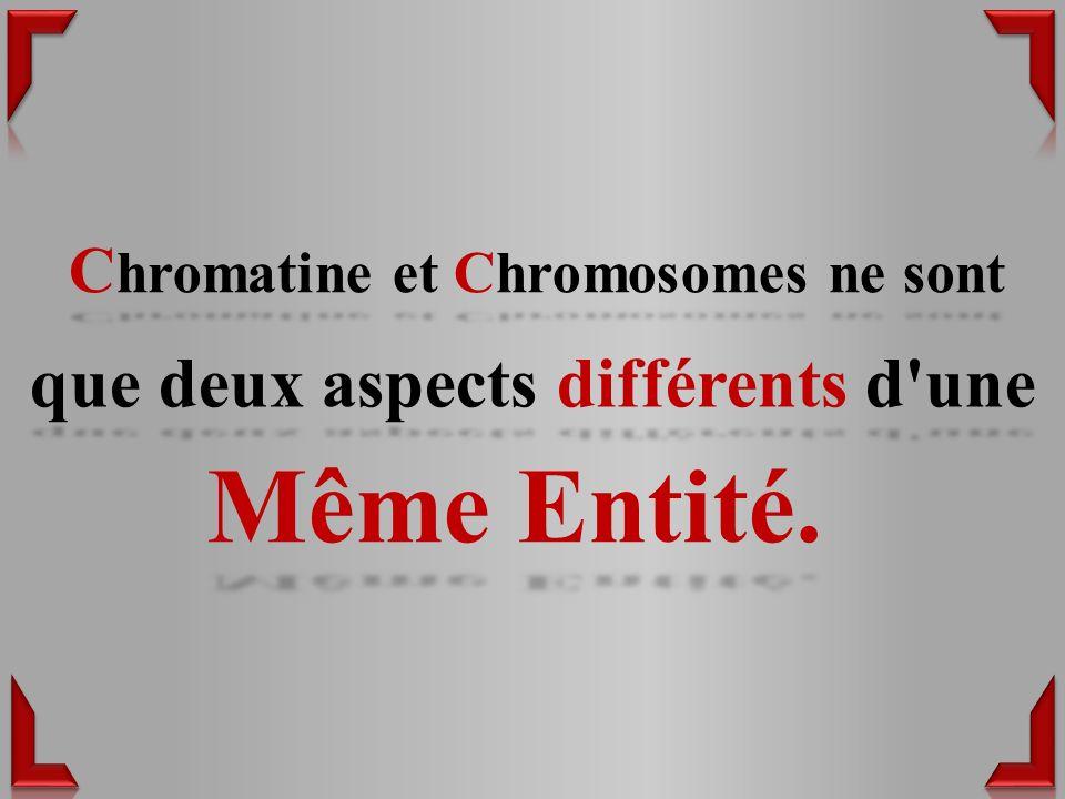 Chromatine et Chromosomes ne sont que deux aspects différents d une