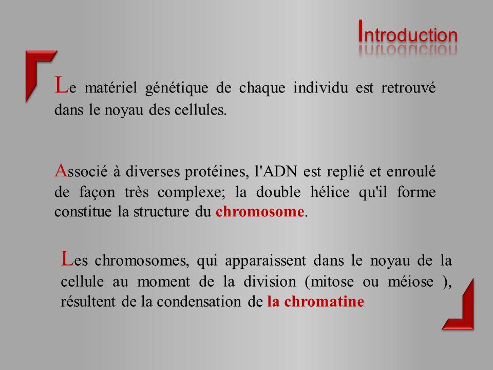 Introduction Le matériel génétique de chaque individu est retrouvé dans le noyau des cellules.