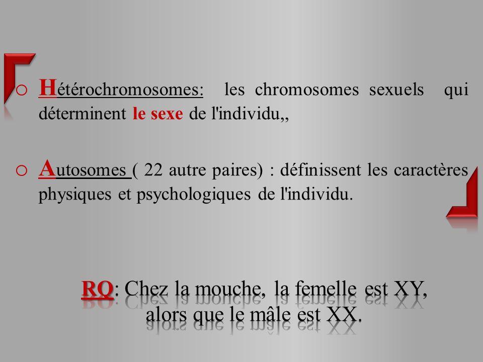 RQ: Chez la mouche, la femelle est XY, alors que le mâle est XX.