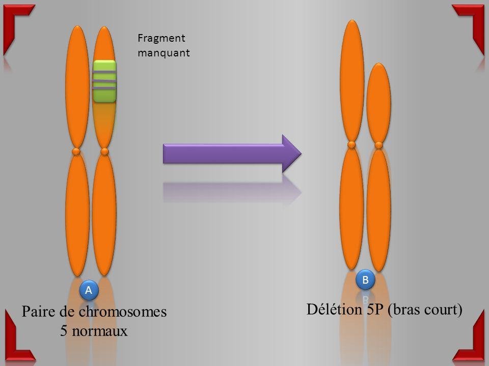 Paire de chromosomes 5 normaux