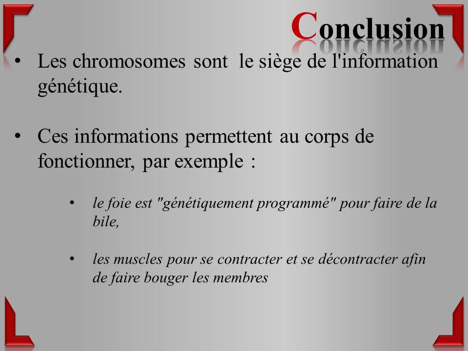 Conclusion Les chromosomes sont le siège de l information génétique.