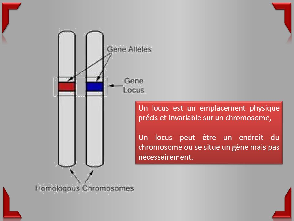 Un locus est un emplacement physique précis et invariable sur un chromosome,