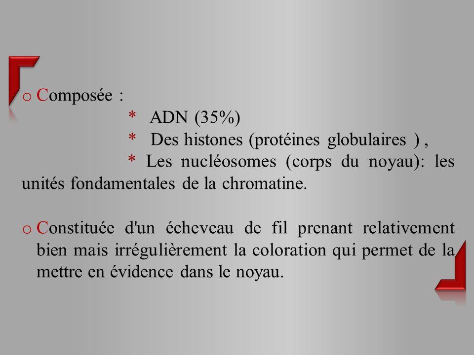Composée : * ADN (35%) * Des histones (protéines globulaires ) , * Les nucléosomes (corps du noyau): les unités fondamentales de la chromatine.