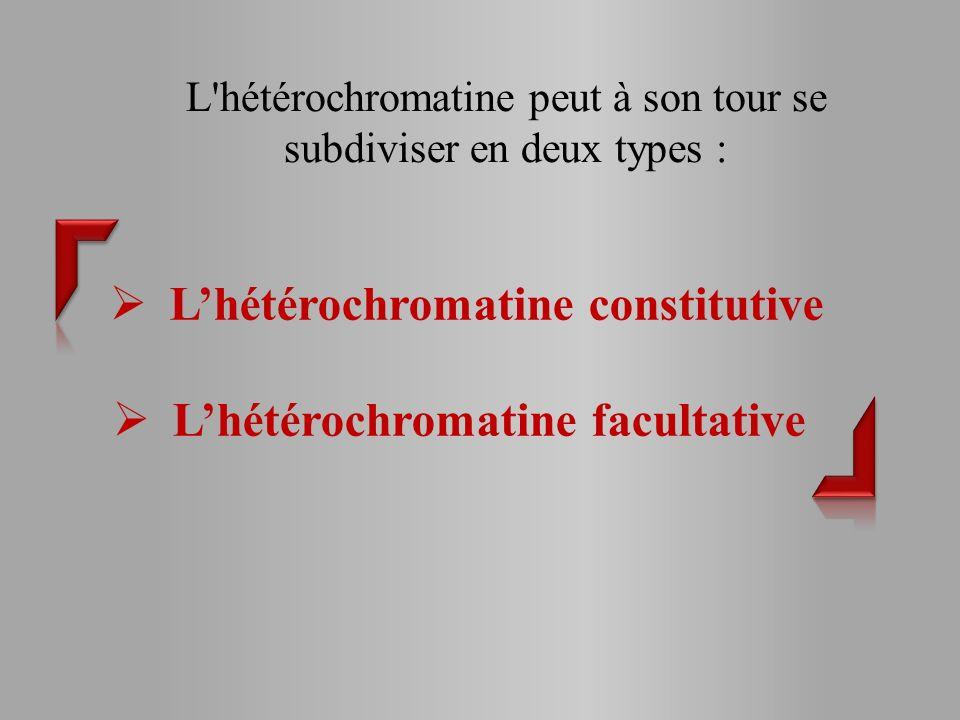 L'hétérochromatine constitutive L'hétérochromatine facultative