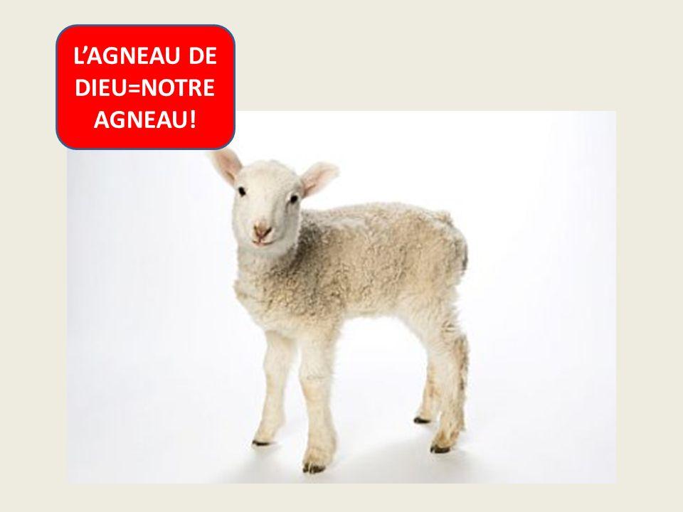 L'AGNEAU DE DIEU=NOTRE AGNEAU!