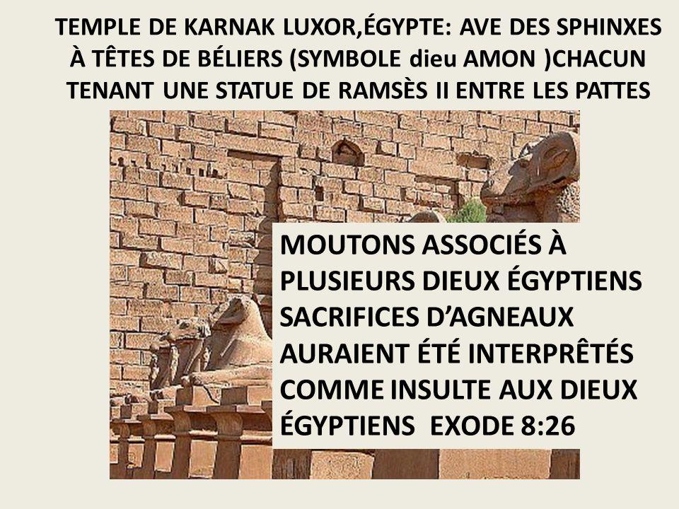 TEMPLE DE KARNAK LUXOR,ÉGYPTE: AVE DES SPHINXES À TÊTES DE BÉLIERS (SYMBOLE dieu AMON )CHACUN TENANT UNE STATUE DE RAMSÈS II ENTRE LES PATTES