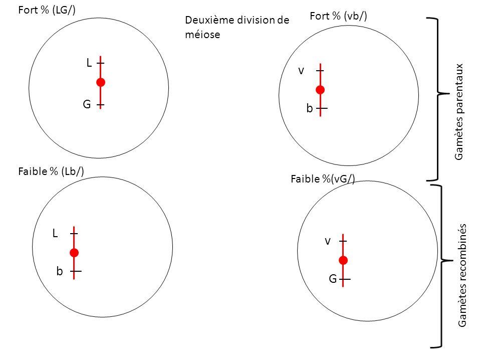 L v G b L v b G Fort % (LG/) Fort % (vb/) Deuxième division de méiose