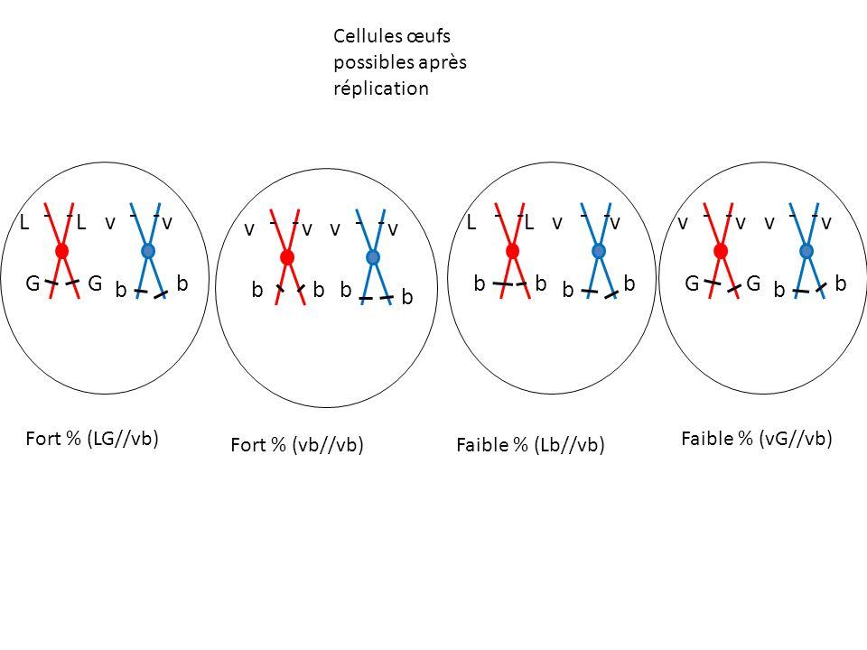 L v G b L v b v G b v b Cellules œufs possibles après réplication