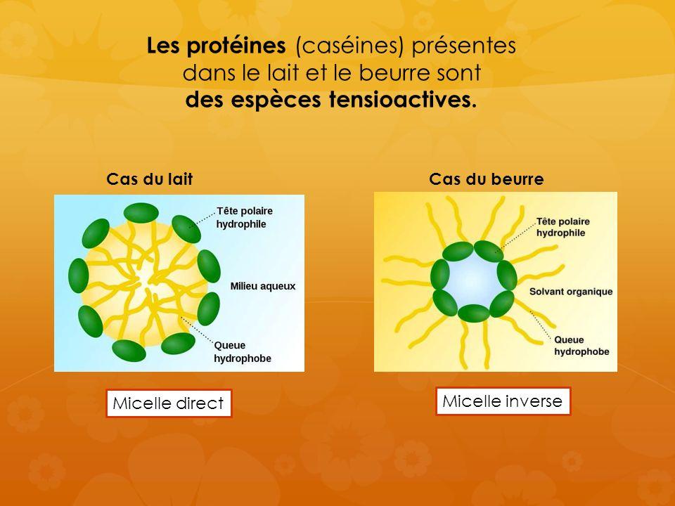 Les protéines (caséines) présentes dans le lait et le beurre sont des espèces tensioactives.