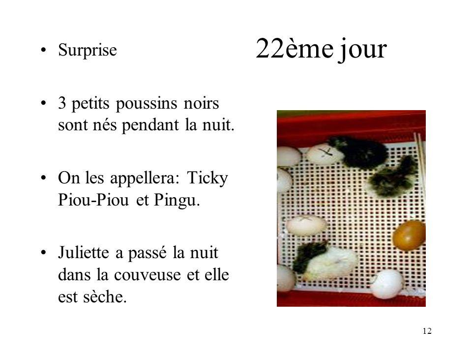 22ème jour Surprise 3 petits poussins noirs sont nés pendant la nuit.
