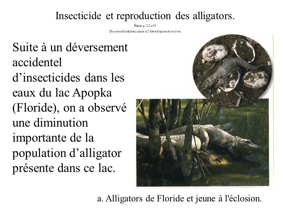 Insecticide et reproduction des alligators.