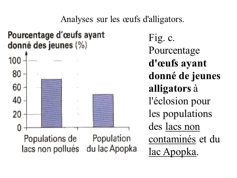 Analyses sur les œufs d alligators.