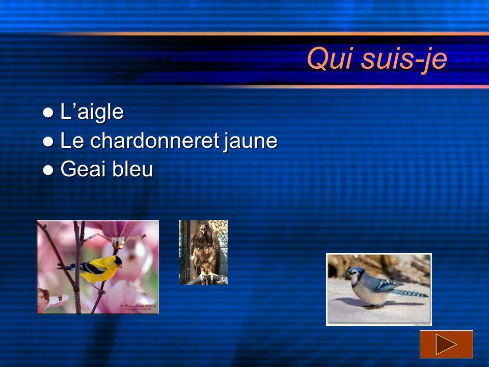 Qui suis-je L'aigle Le chardonneret jaune Geai bleu