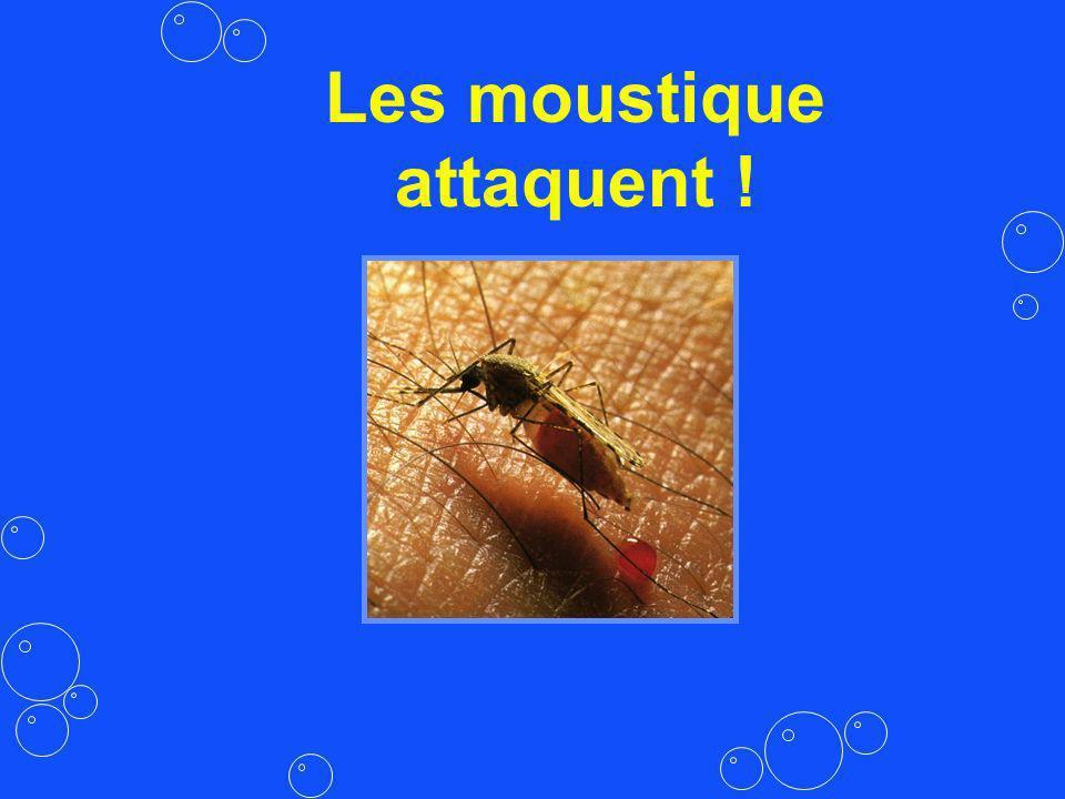 Les moustique attaquent !