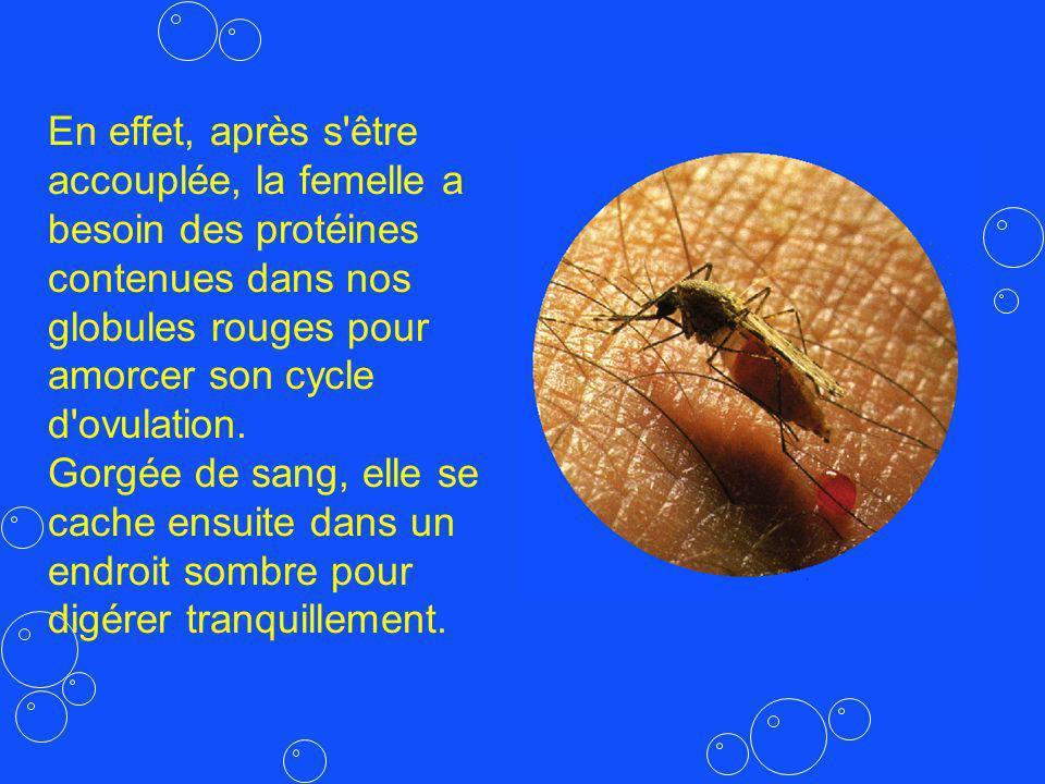 En effet, après s être accouplée, la femelle a besoin des protéines contenues dans nos globules rouges pour amorcer son cycle d ovulation.