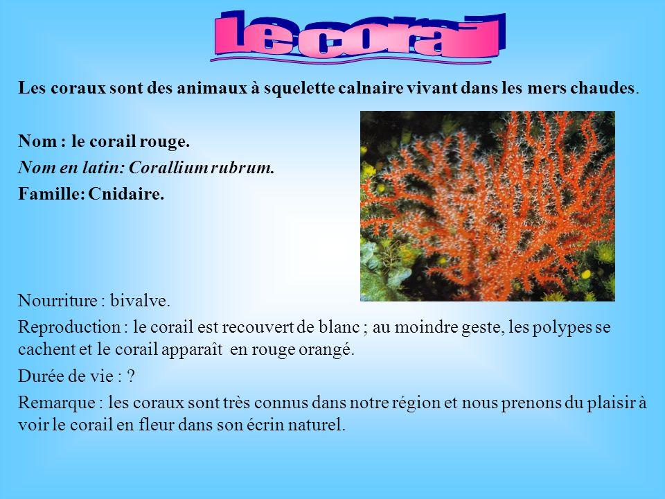Le corail Les coraux sont des animaux à squelette calnaire vivant dans les mers chaudes. Nom : le corail rouge.