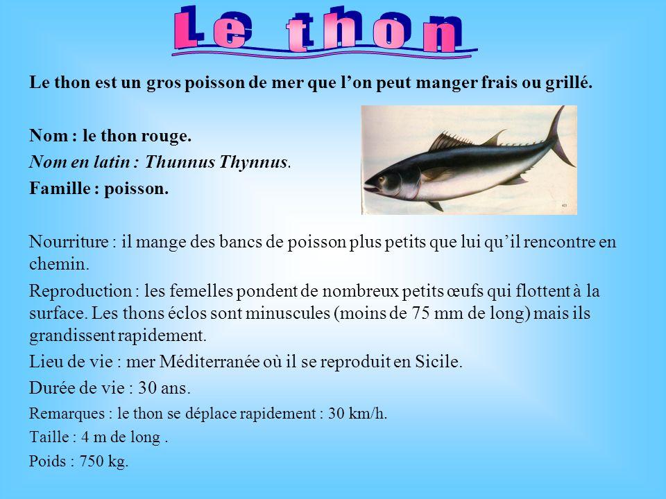 Le thon Le thon est un gros poisson de mer que l'on peut manger frais ou grillé. Nom : le thon rouge.