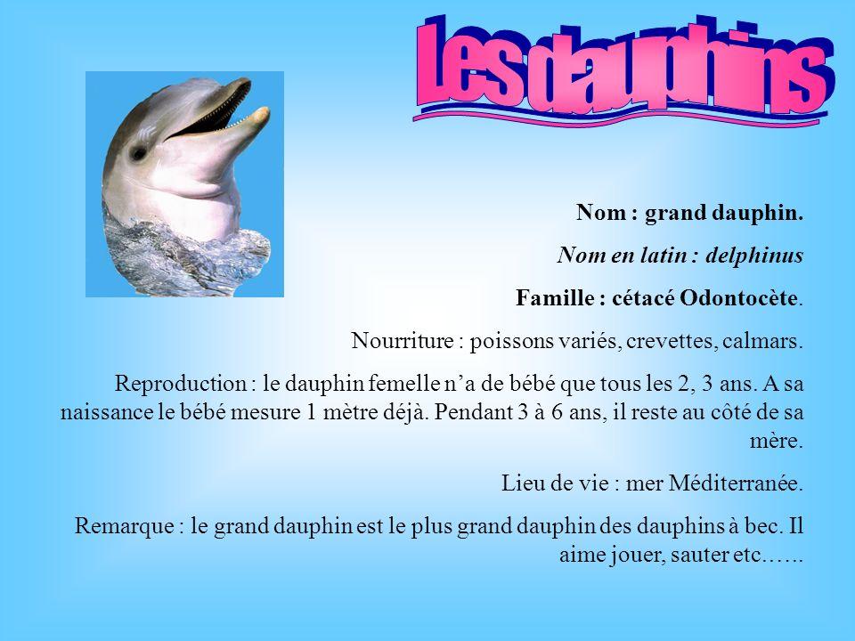Les dauphins Nom : grand dauphin. Nom en latin : delphinus