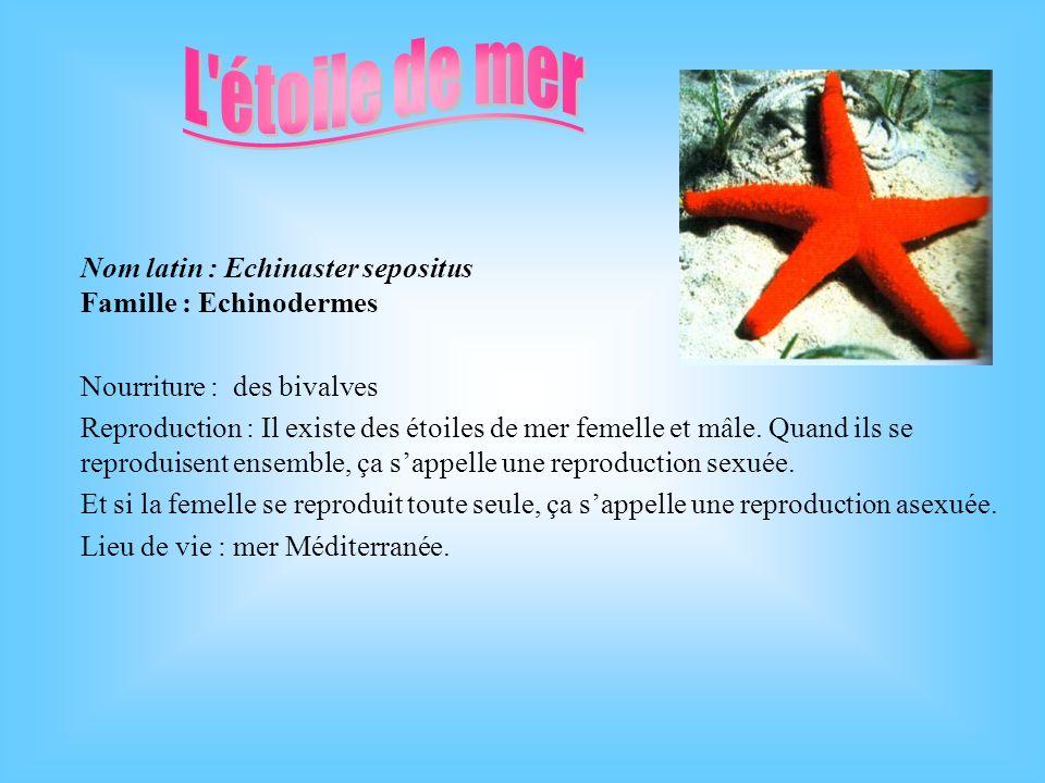 L étoile de mer Nom latin : Echinaster sepositus Famille : Echinodermes. Nourriture : des bivalves.