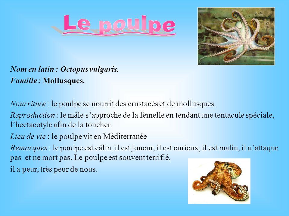 Le poulpe Nom en latin : Octopus vulgaris. Famille : Mollusques.