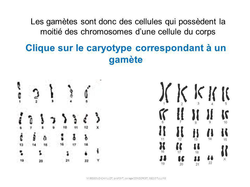 Clique sur le caryotype correspondant à un gamète