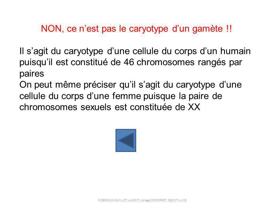 NON, ce n'est pas le caryotype d'un gamète !!