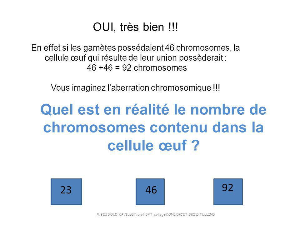OUI, très bien !!! En effet si les gamètes possédaient 46 chromosomes, la cellule œuf qui résulte de leur union possèderait :