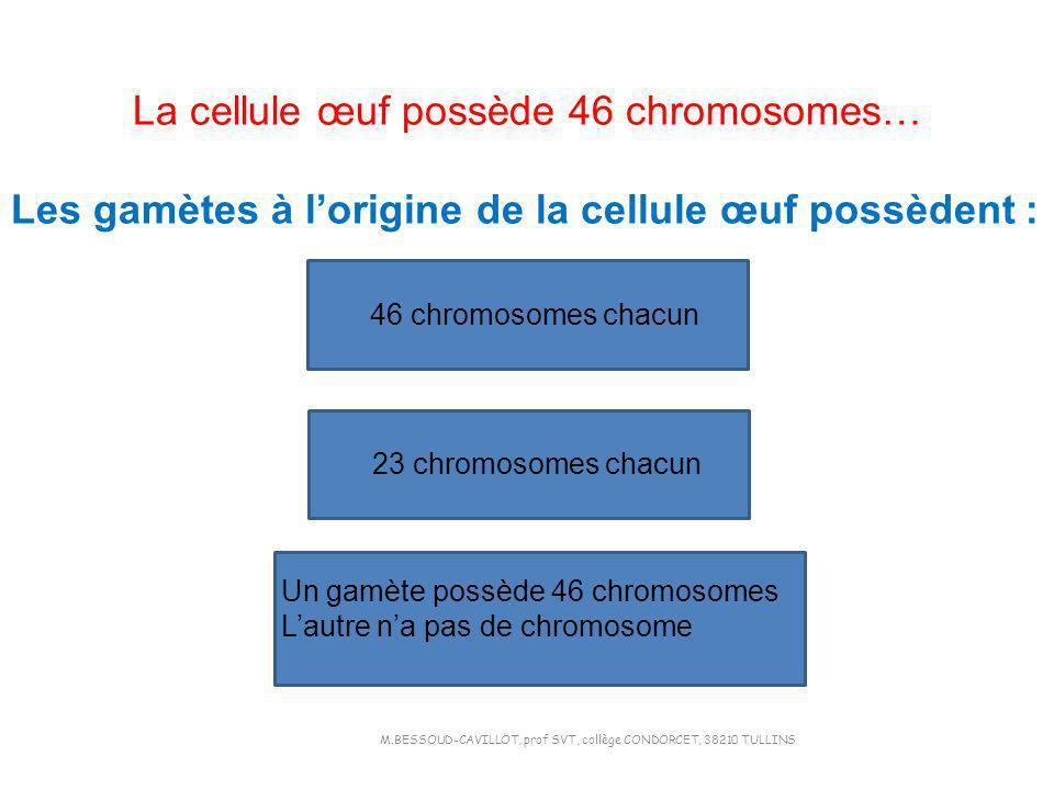La cellule œuf possède 46 chromosomes…