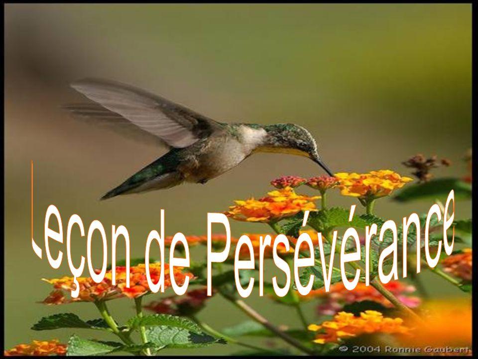 Leçon de Persévérance