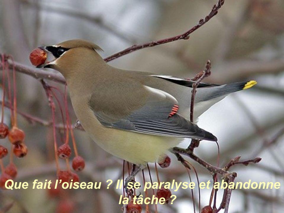 Que fait l'oiseau Il se paralyse et abandonne la tâche