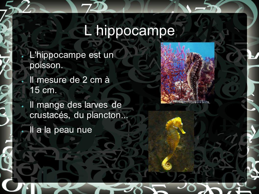 L hippocampe L hippocampe est un poisson. Il mesure de 2 cm à 15 cm.