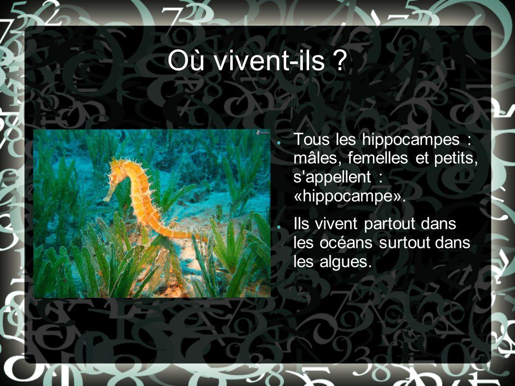 Où vivent-ils Tous les hippocampes : mâles, femelles et petits, s appellent : «hippocampe».