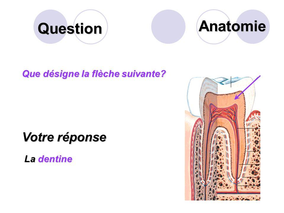Anatomie Question Votre réponse Que désigne la flèche suivante
