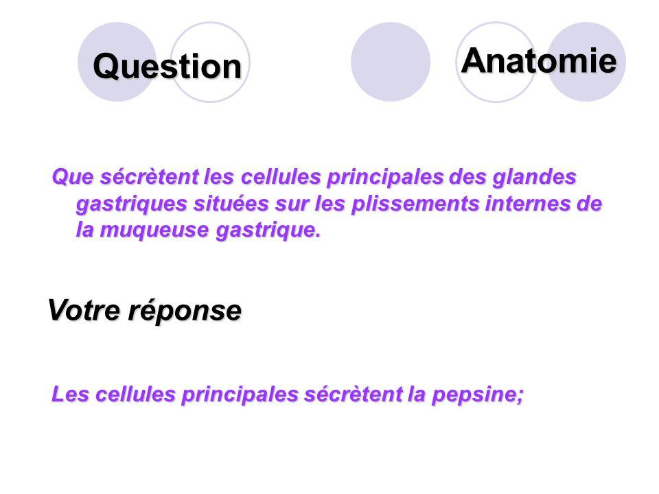 Anatomie Question Votre réponse