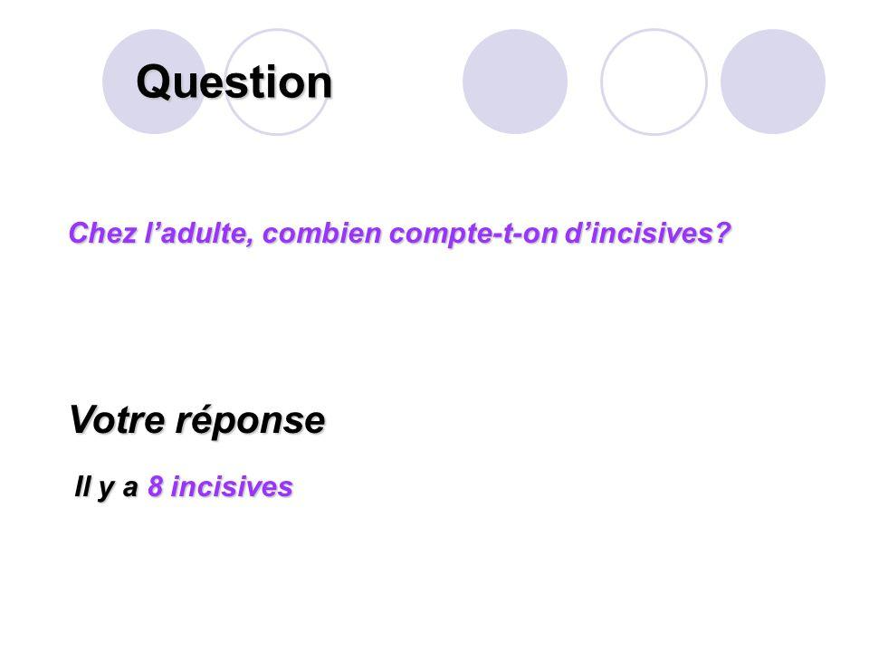 Question Votre réponse Chez l'adulte, combien compte-t-on d'incisives