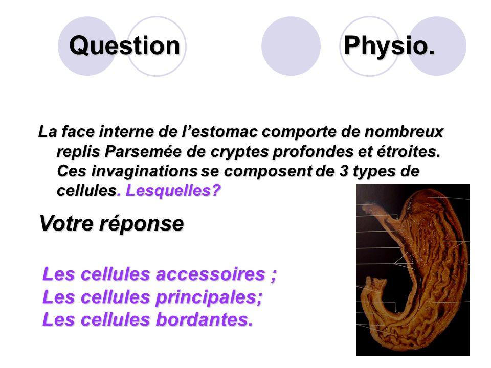 Question Physio. Votre réponse Les cellules accessoires ;