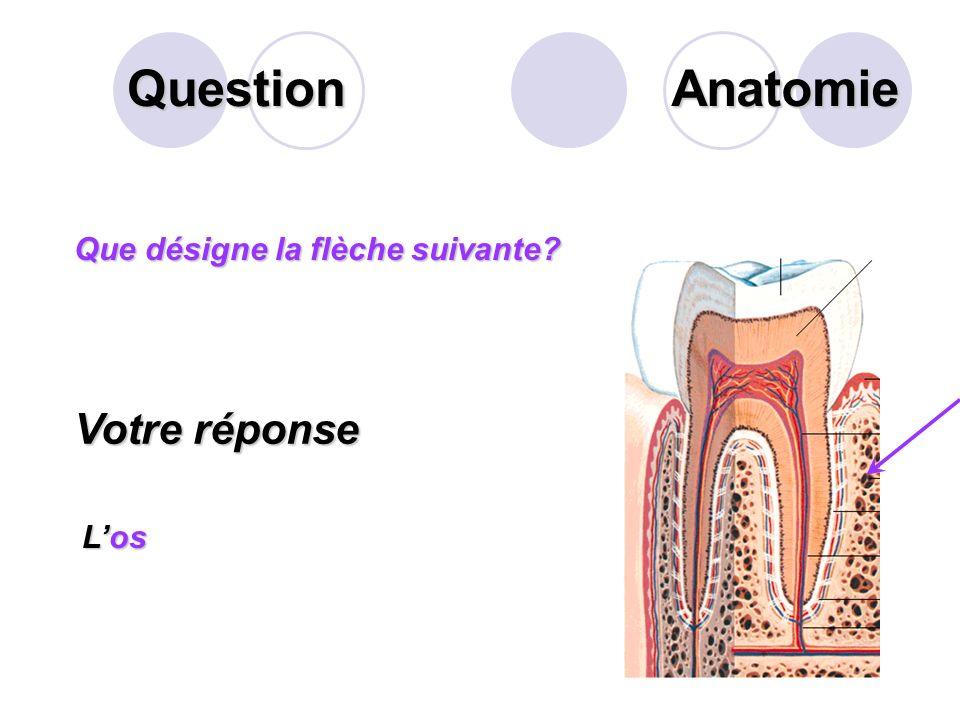 Question Anatomie Votre réponse Que désigne la flèche suivante L'os