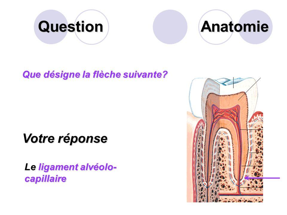 Question Anatomie Votre réponse Que désigne la flèche suivante