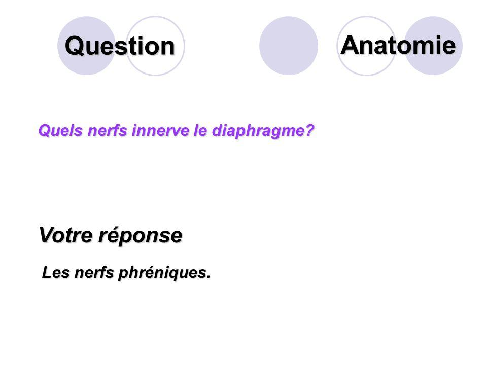Question Anatomie Votre réponse Quels nerfs innerve le diaphragme
