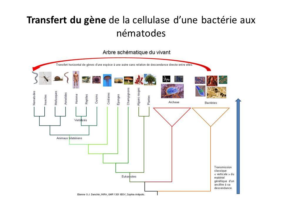 Transfert du gène de la cellulase d'une bactérie aux nématodes