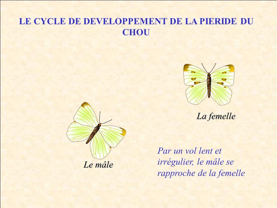 LE CYCLE DE DEVELOPPEMENT DE LA PIERIDE DU CHOU