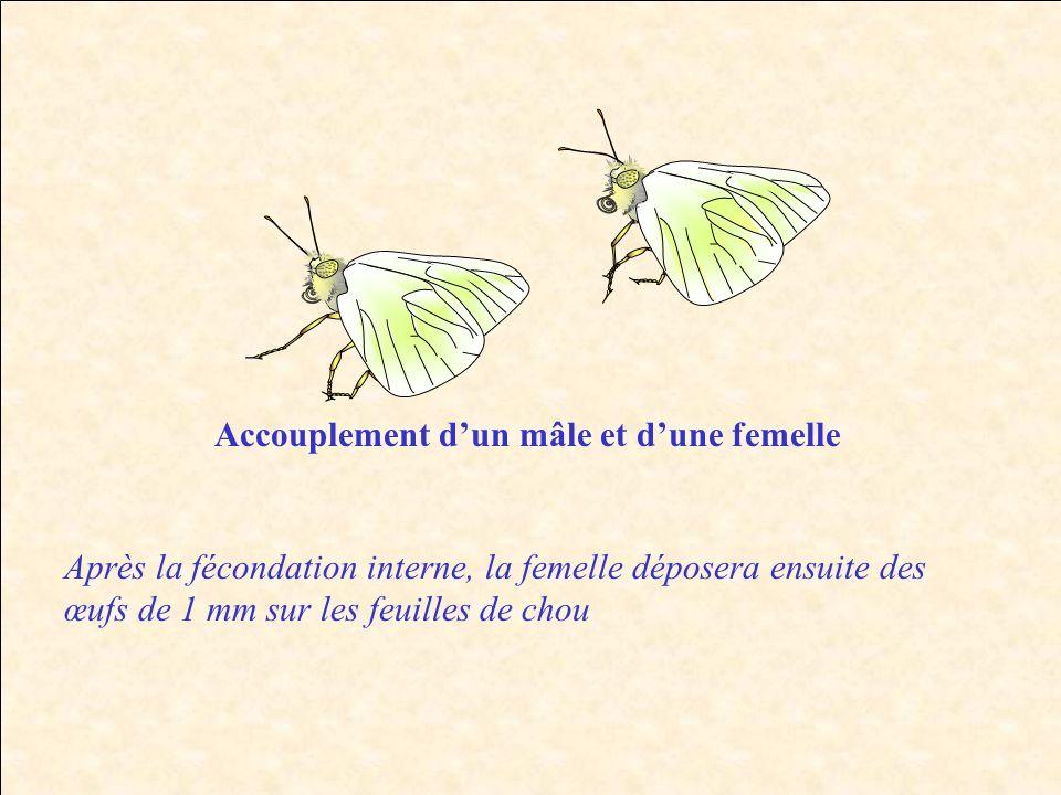Accouplement d'un mâle et d'une femelle