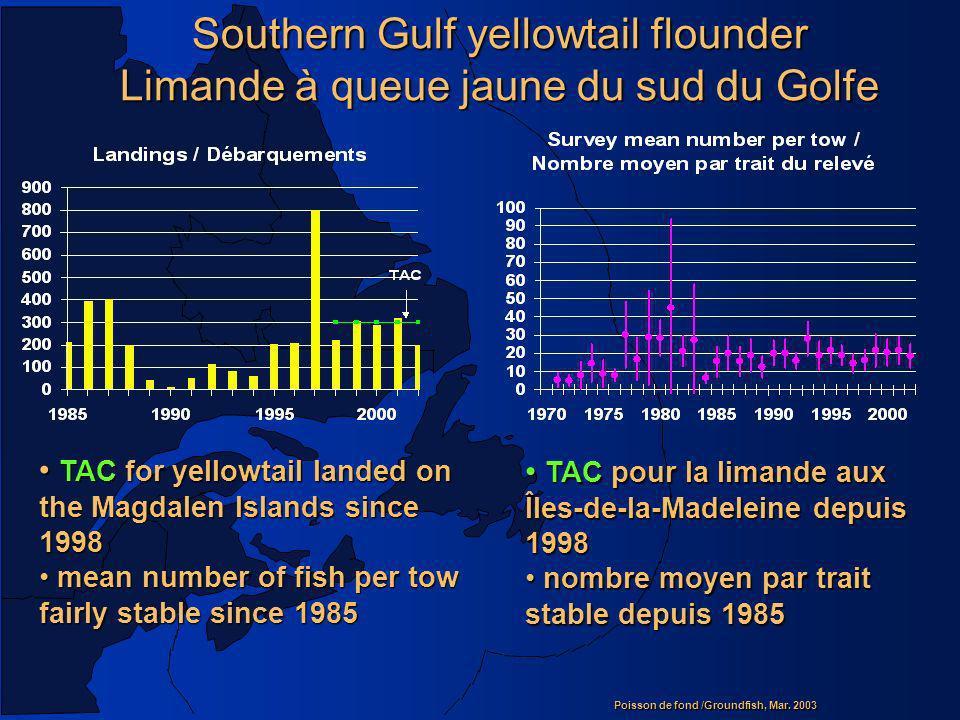 Southern Gulf yellowtail flounder