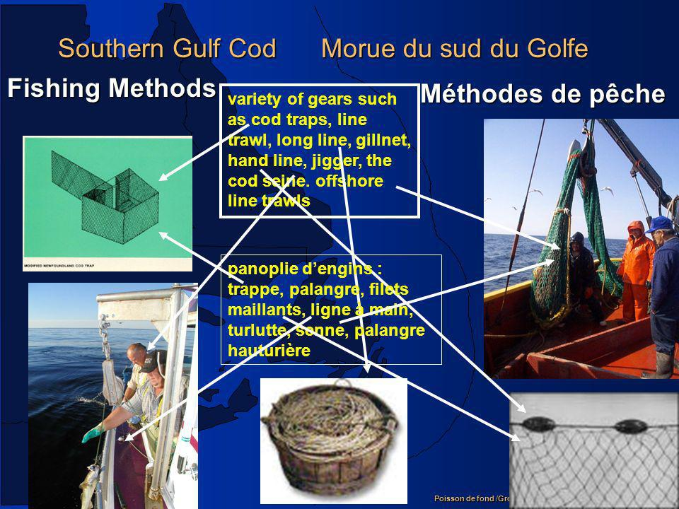 Southern Gulf Cod Morue du sud du Golfe