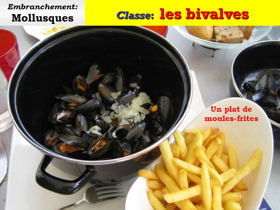 Embranchement: Mollusques Un plat de moules-frites