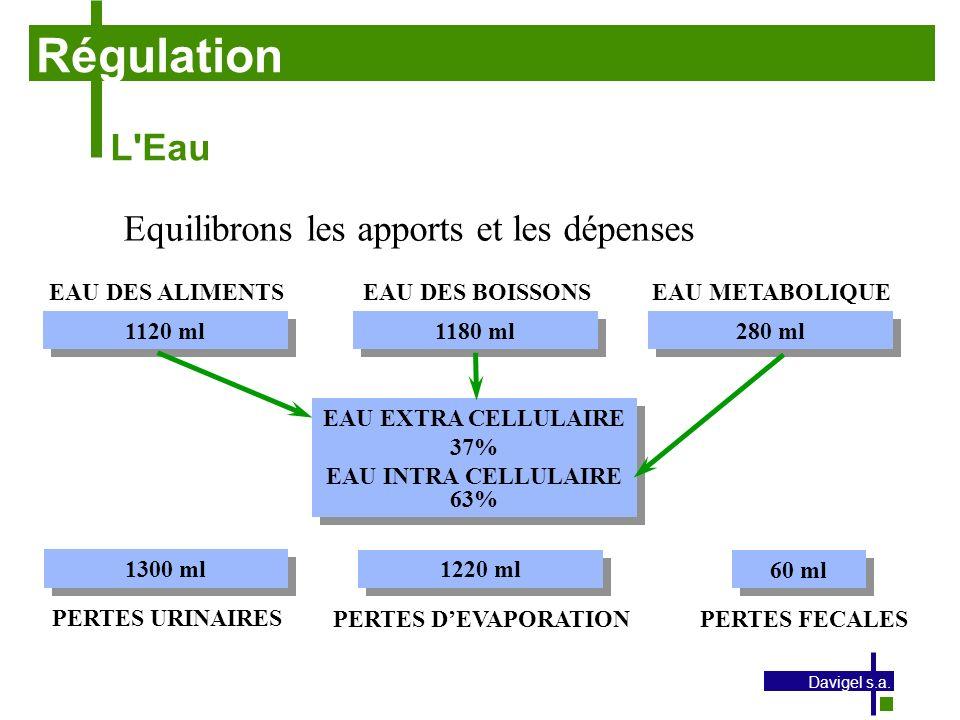 Régulation L Eau Equilibrons les apports et les dépenses