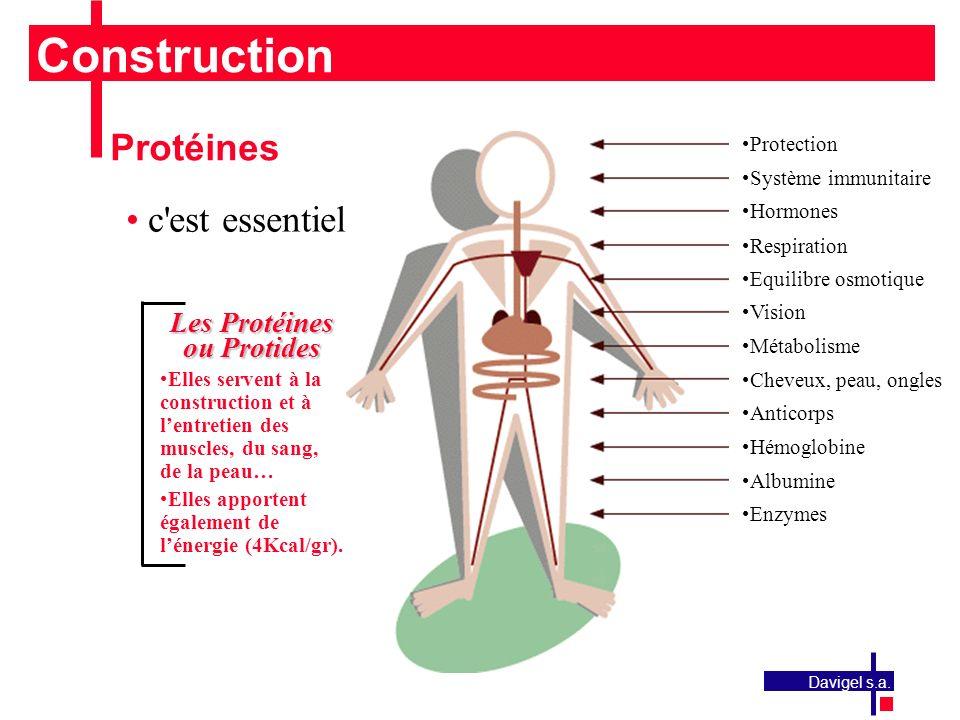 Construction Protéines c est essentiel Les Protéines ou Protides