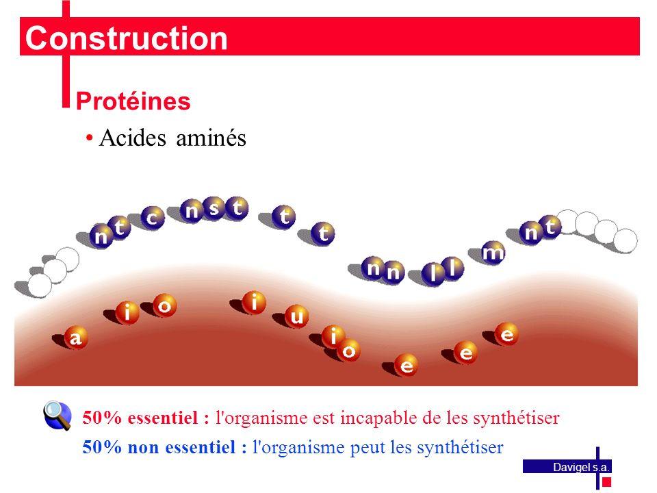 Construction Protéines Acides aminés