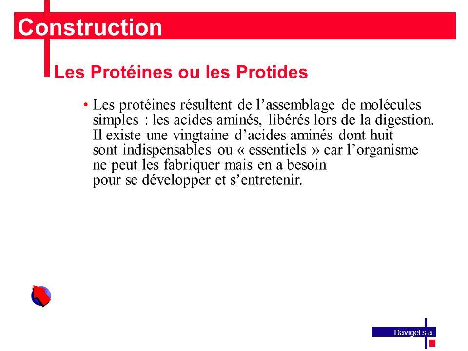 Construction Les Protéines ou les Protides